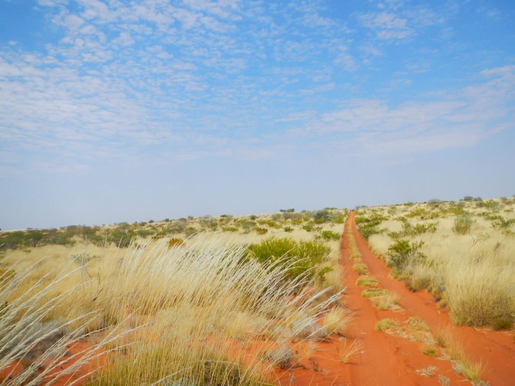 Red track through the spinifex